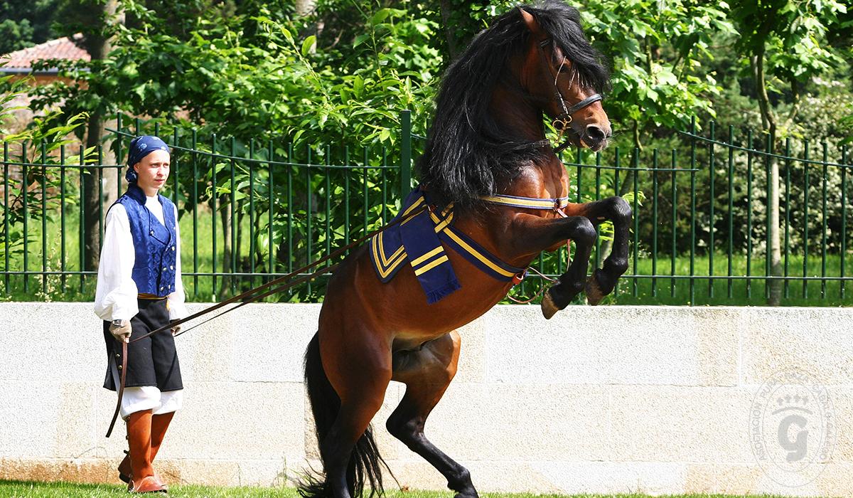 Asociación Pura Raza Cabalo Galego - Alta Escuela