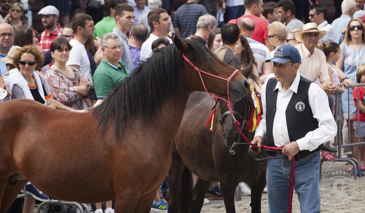 Asociación Pura Raza Cabalo Galego - Concursos morfológicos