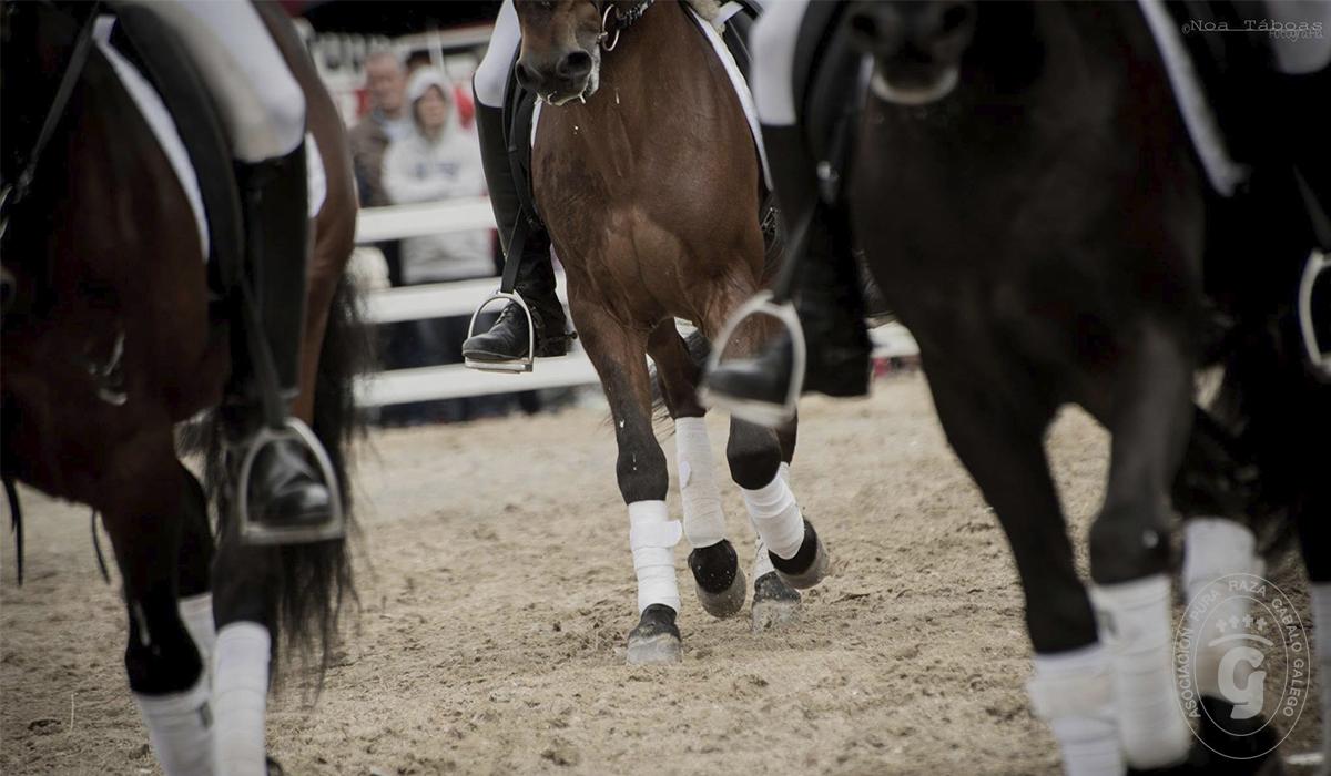 Asociación Pura Raza Cabalo Galego - Doma clásica