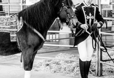 Asociación Pura Raza Cabalo Galego - Dragones de Santiago