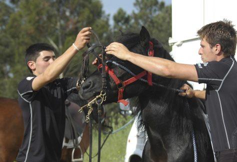 Asociación Pura Raza Cabalo Galego - raid
